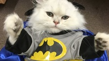 Purr-fect job: cat cafe is looking for cat-sitters