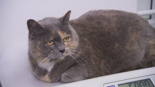 Chubby cat Polly is also coming to the centre.