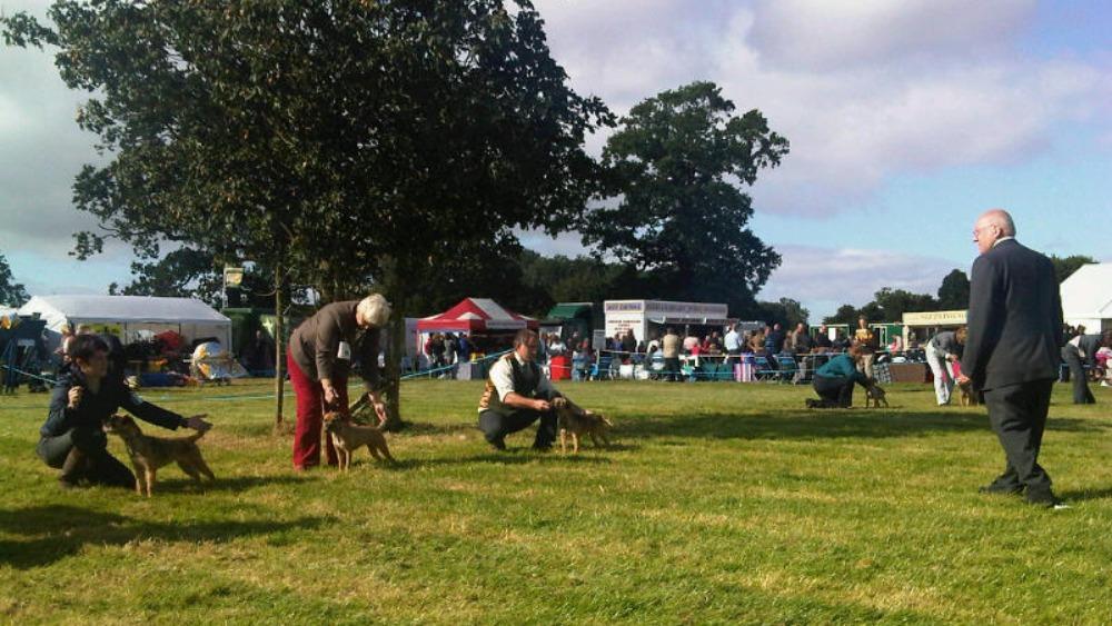 Darlington Dog Show