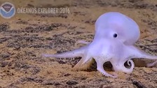 Casper the Octopus