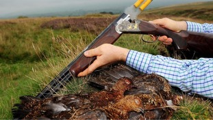 Cartridges are released from a shotgun after a grouse is shot