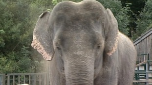 Plans for Europe's largest elephant sanctuary causes controversy
