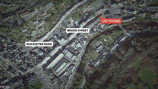 Where the cat was found