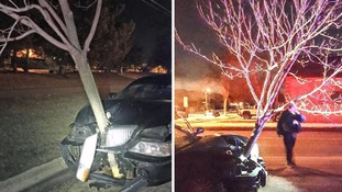 Woman caught drunk driving with tree stuck in her car bonnet