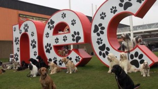 Crufts celebrates 125th anniversary