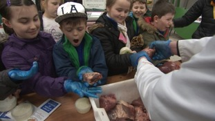 Youngsters try out being farmers for a day