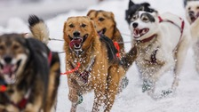 A team heads out at the ceremonial start of the Iditarod Trail Sled Dog Race to begin their near 1,000-mile race