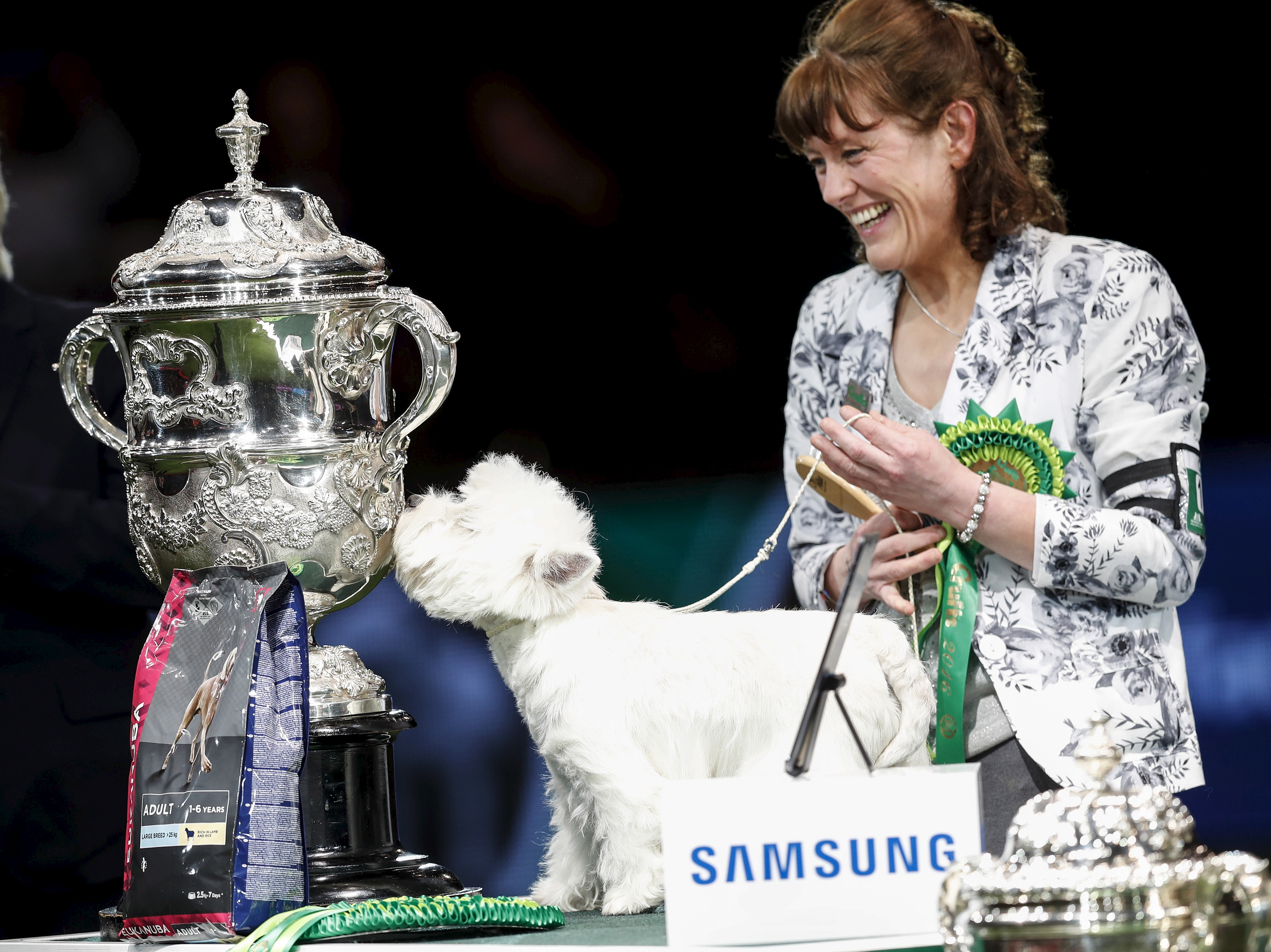 Prize Money In Dog Shows