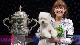Crufts 2016 winner is a Westie called Devon