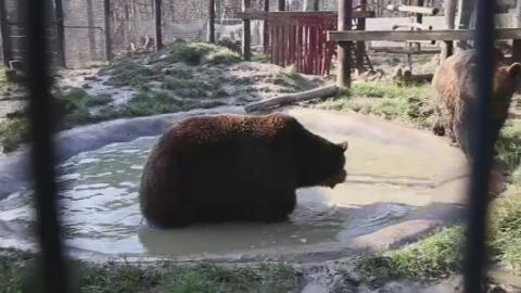 G-Bear_bromance