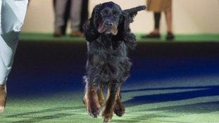 Crufts judge awarded prize to dog co-owned by her sister