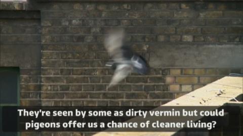 pigeon_facebook_subtitles2