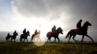 Horses and Jockeys during a morning warm up at Cheltenham Racecourse.