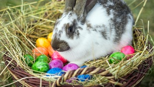 Pet shop chain suspends sale of bunnies over Easter