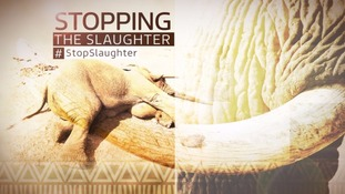 #StopSlaughter: The stories which made the news