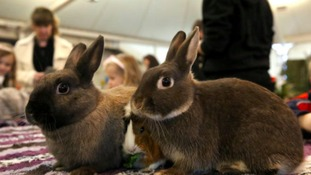 Pets will be judged on tameness, cuteness, condition and habitat.