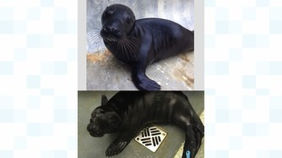 Rare seal pups to have DNA test to see if they are related