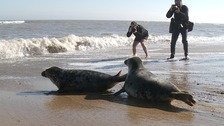 The rare twin seals called R2-D2 and C-3PO have been returned to the wild.
