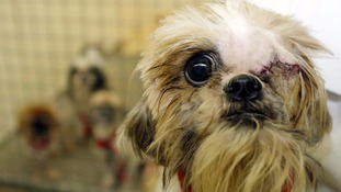 Animal cruelty complaints are on the rise in the region, warns RSPCA