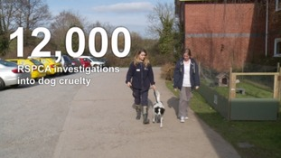 RSPCA report reveals extreme cases of cruelty