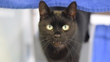 'Vampire' fanged cat gets new home in new owners appeal.