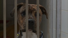 The RSPCA says there are still too many cases of animal abuse.