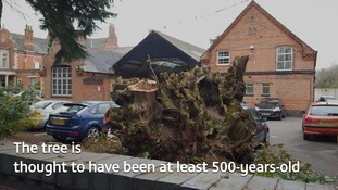 Anger as tree thought to be hundreds of years old is chopped down