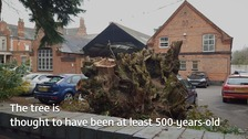 The stump left after the yew tree was cut down