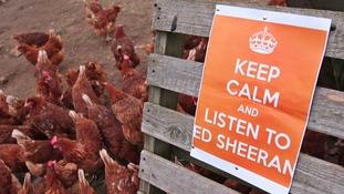 Keep calm and listen to Egg Sheeran