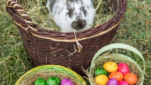 Bunnies? Chocolate? What do you think of at Easter?