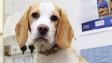 Vets easter egg warning as 500,000 dogs fed chocolate.