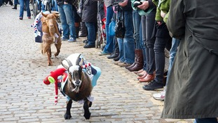 Everything you need to know about The Goat Race 2016.