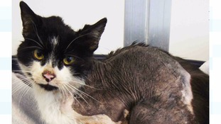 Cat found covered in oil is named 'Diesel' by RSPCA as it recovers from ordeal