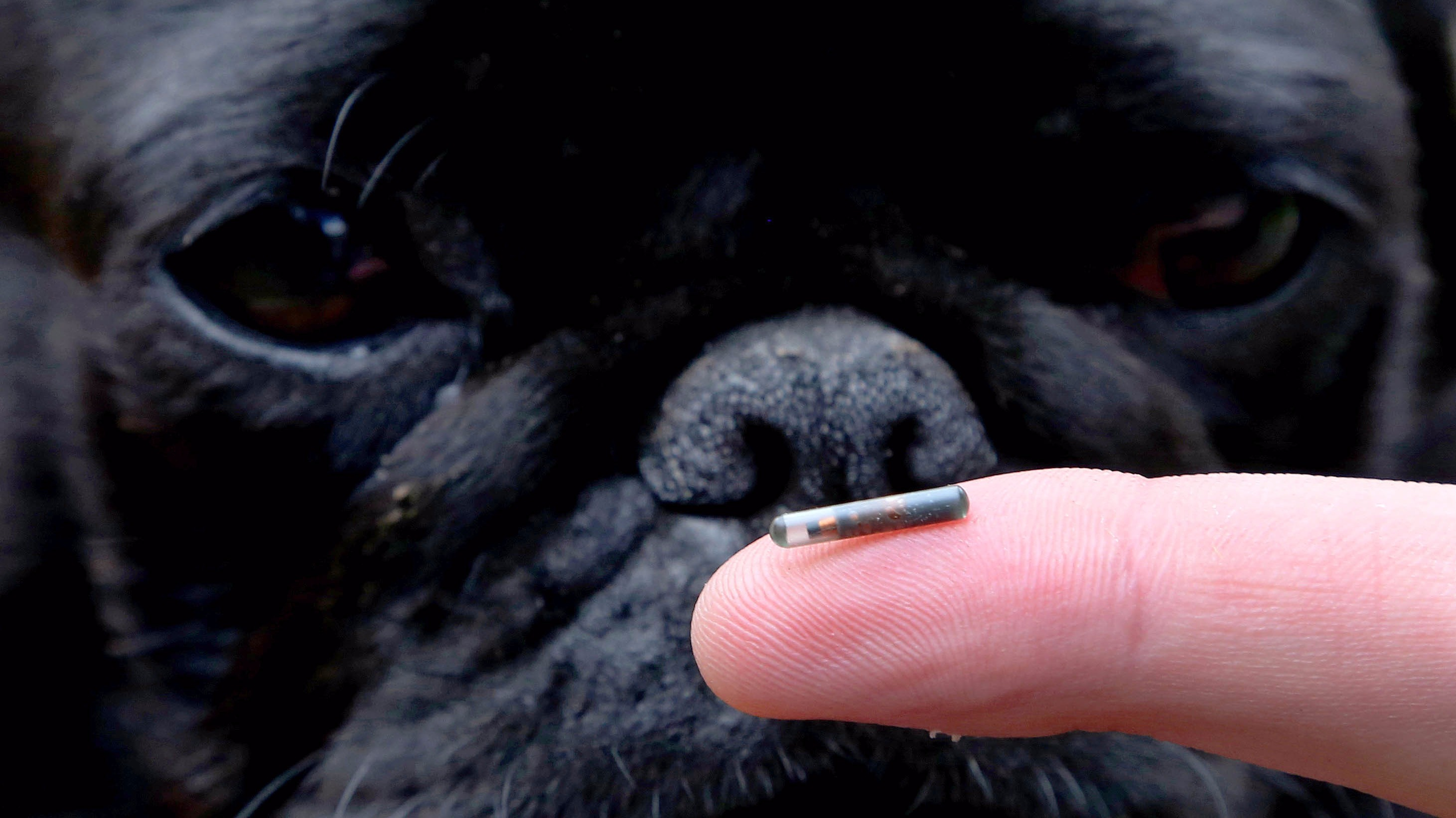How Much Cost Microchip Dog