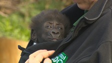 Afia made her first outing since being born by emergency caesarean at Bristol Zoo
