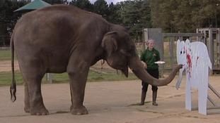 Karishma the elephant