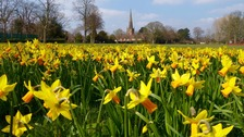 daffodils in front of a church in Old Yardley, Birmingham