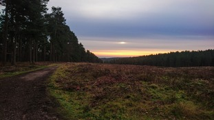 The sun rising in Cannock Chase