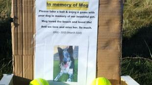 Meg the dog