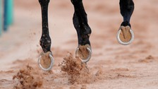 File picture: A horse's hooves