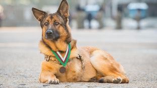 Military dog who lost her leg in Afghanistan awarded highest war medal for animals