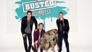 The reunion tour is called Pigs Can Fly