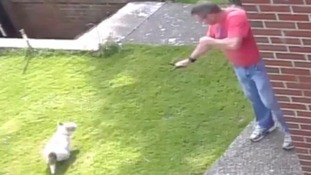 Man fined £500 for firing catapult at dogs