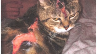 Man jailed for throwing boiling water on neighbour's cat