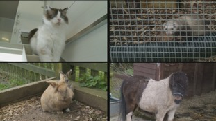 Hundreds of animals at risk after sanctuary due to close 'within weeks'