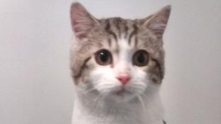 Kitten dumped in Ikea car park with heartbreaking note