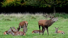 Up to 100 deer have either died or been put down due to disease