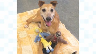 A dog called Doris from Darlington's Dog Trust is pictured with two knitted dolls who were donated to the Dogs Trust by a mystery dog lover