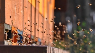 Vandals kill off thousands of honey bees at wildlife centre