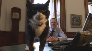 Meet Palmerston the Diplomog! Foreign Office welcomes its newest employee
